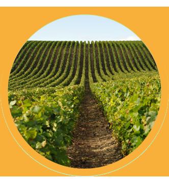 Au camping de Châtillon-sur-Seine, visitez le vignoble du Châtillonnais