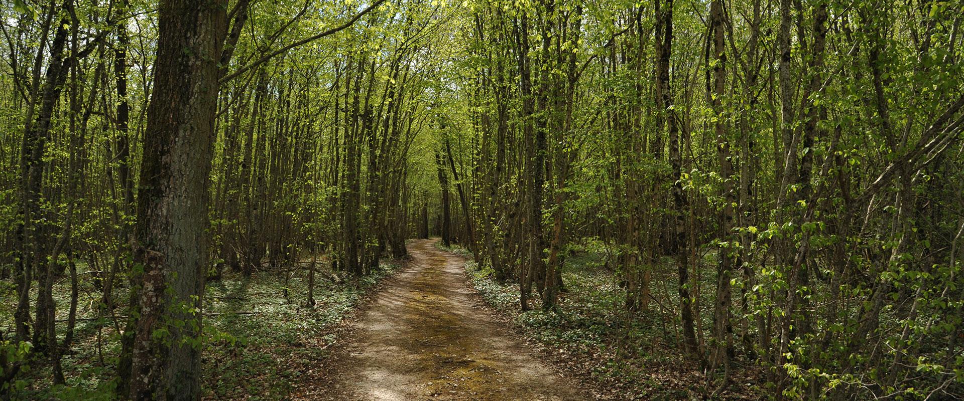 forêt châtillon sur seine